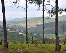 Forrest in Vietnam - USAID Photo
